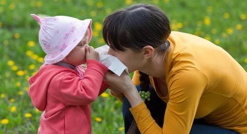 Alergii glavna